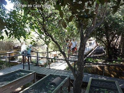 Imagen del Centre de Reproducció de Tortugues de l'Albera