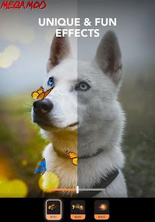 Enlight Pixaloop Pro