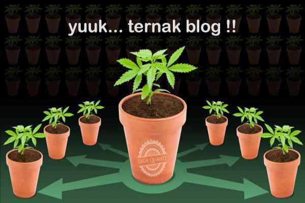 Syarat Bermain Multiblog