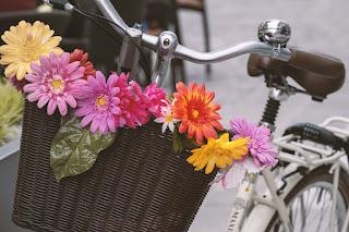 Kamplı Turlar Bisiklet Rotaları Samsun Province Turkey deki bisiklet turu rotaları Uzun Tur için Hazırlık Bisikletliler Derneği Bisiklet Gezgini Yeşilay Bisiklet Turu Bisikletliler Derneği Samsun Temsilciliği Samsun Bisikletli Topluluğu Facebook Bisiklet Tur ve Etkinlikleri  Bisiklet Turları ile ilgili görseller