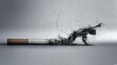 Cigarro, as conzas formam um corpo que se arrasta