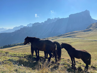 Horses at Passo Giau and the Lastoni di Formin in the distance.