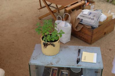 まつもと古市(ふるいち)#17 よこのま 植物
