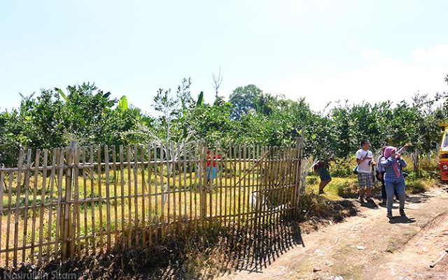 Memasuki perkebunan jeruk di desa Poncokusumo