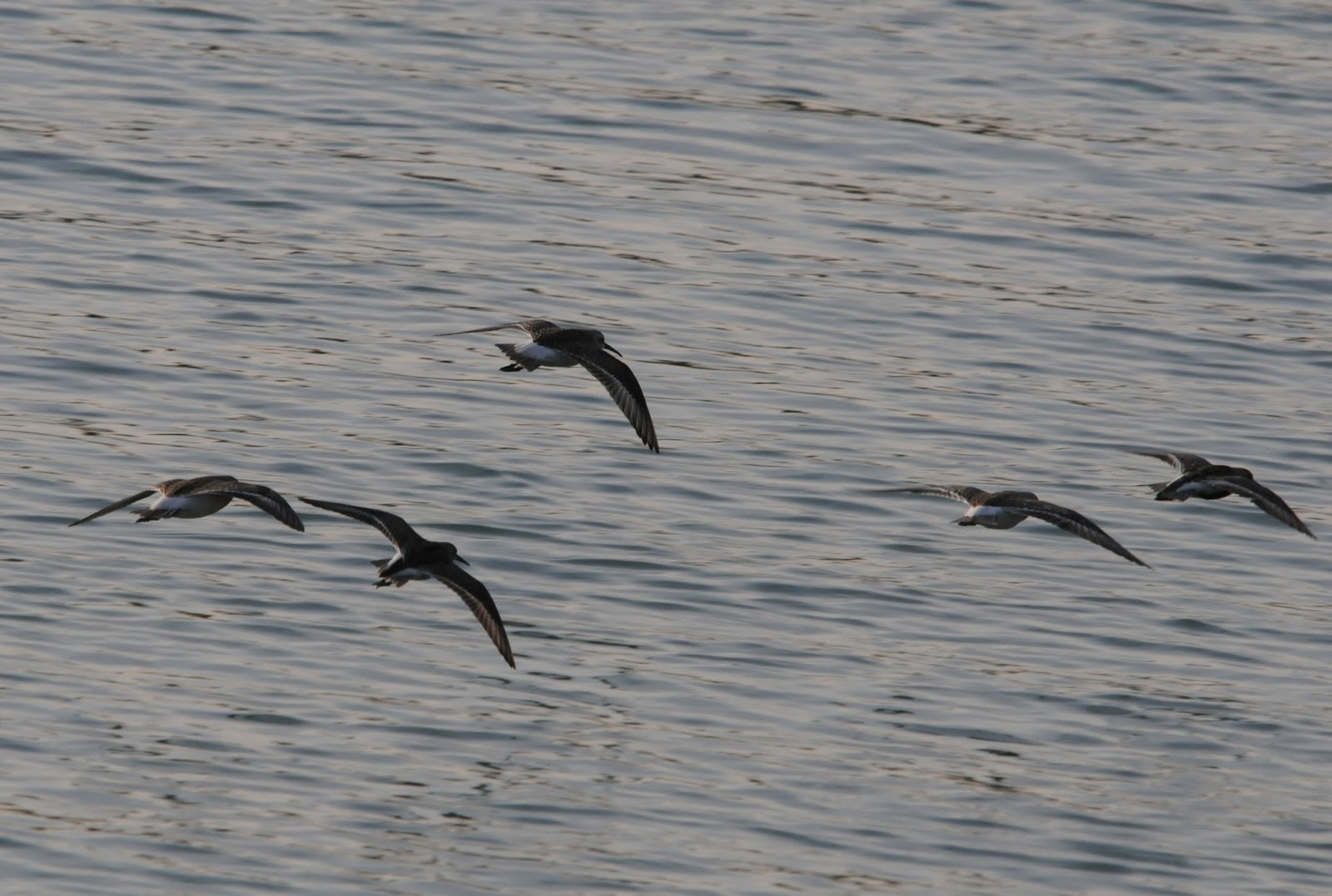 Matt Eade's Blog: Seaford Head & Cuckmere Haven 28/8/13