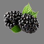 blackberry in Spanish