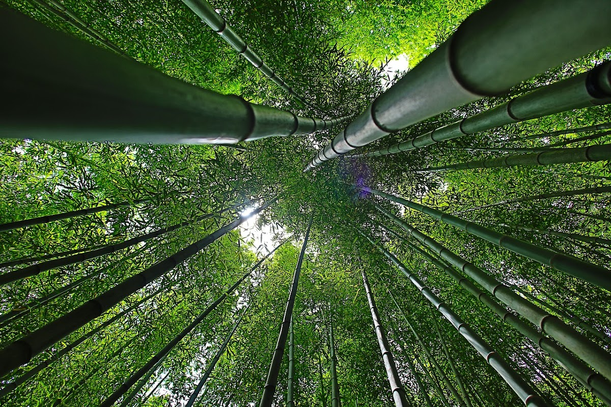 Download Wallpaper bambo