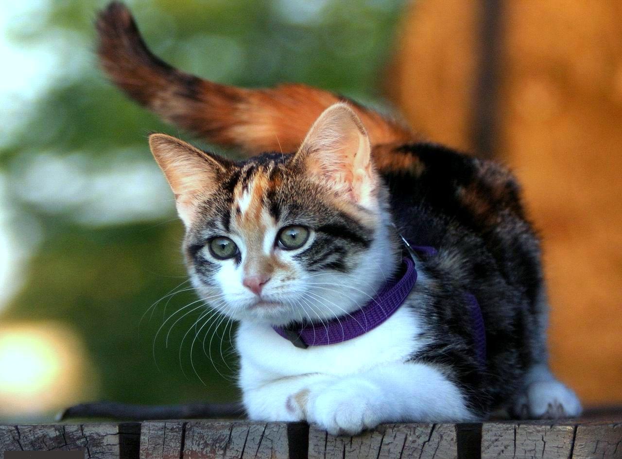 Gambar Kucing Imut dan Lucu | Kumpulan Gambar