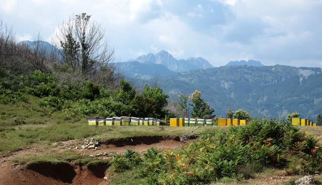 Ήρθε ο Γενάρης και οι μέλισσες ξυπνούν: Η θερμοδυναμική επίδραση της κυψέλης!!!