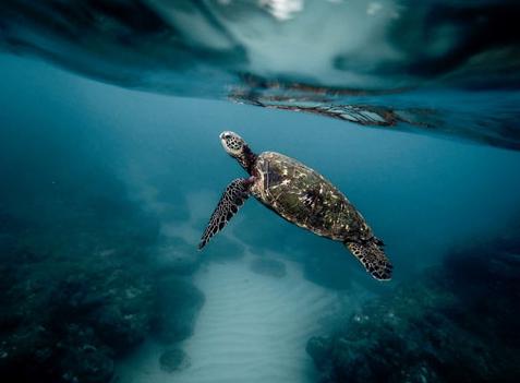 Explore the ocean in Hawaii