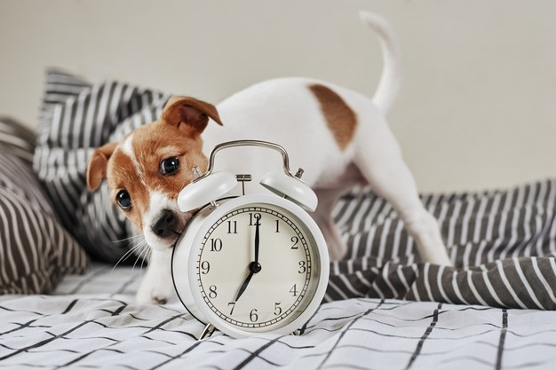 5 نصائح تجعل الكلاب المنزلية تعيش عمرا أطول