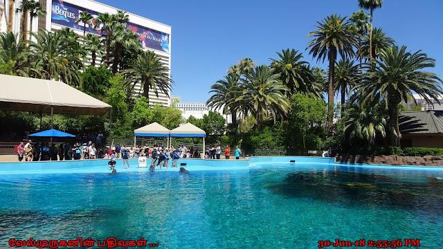 Mirage Casino Dolphin Show