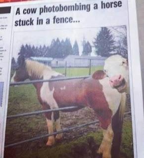 Imagenes divertidas de animales