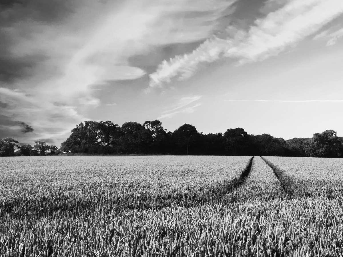 Отказ в регистрации перехода прав на земли сельскохозяйственного назначения