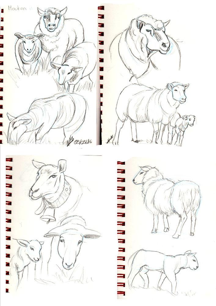 IM Challenge #3 [Aramis] : Les loups garoux de Thiercelieux   Recherche_mouton01