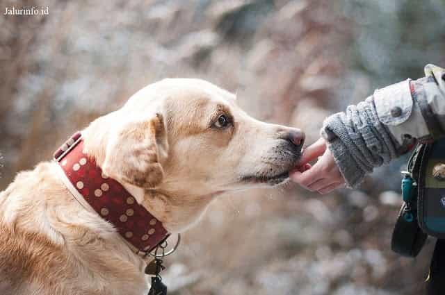 apa penyebab islam melarang memelihara anjing