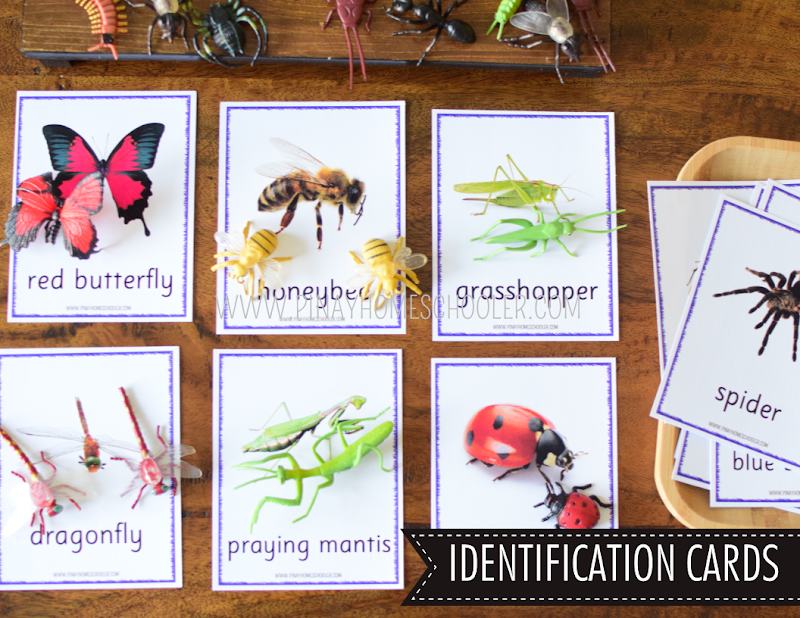 SAFARI TOOB THEME IDENTIFICATION, MACTHING AND LITERACY ACTIVITIES