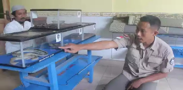 30 Anak Kobra Ditemukan di Lipatan Karpet Masjid, Kok Bisa?