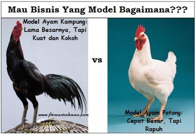 Kekokohan Bisnis;Menjadi Wirausaha Kuat Layaknya Ayam Kampung  Yang Tidak Kampungan
