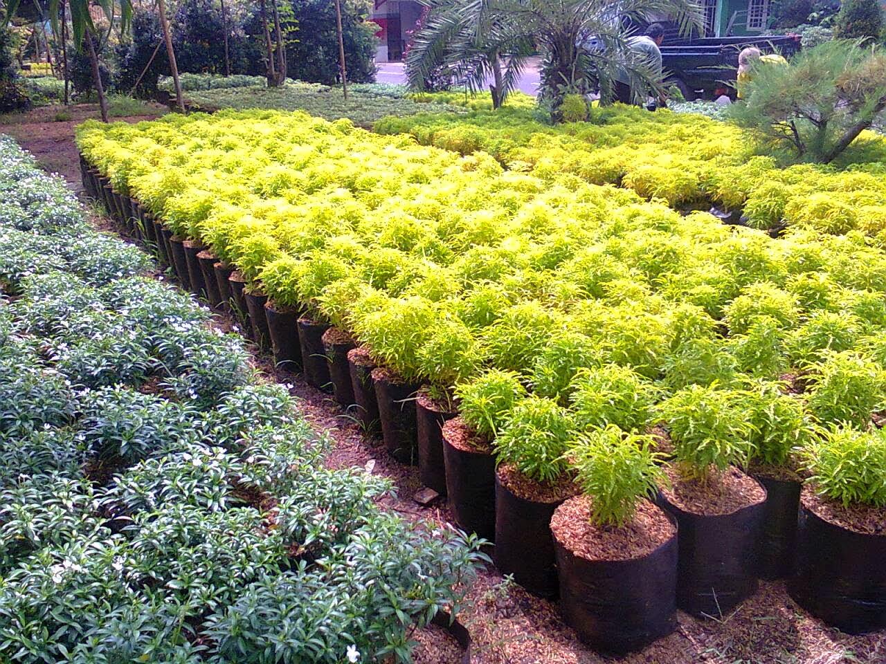 54 Gaya Terbaru Bunga Hias Di Taman Bunga Hias