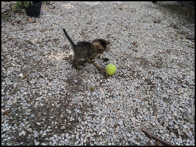 blog famille chaton