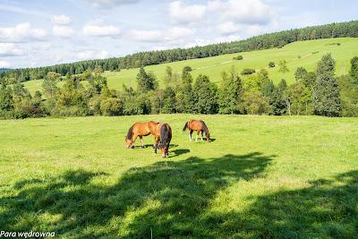 Między Skwirtnym a Regietowem, konie huculskie