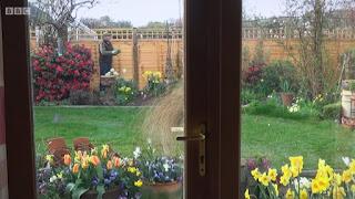Georges garden