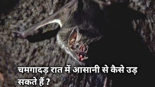 चमगादड़ रात में आसानी से कैसे उड़ सकते हैं ?