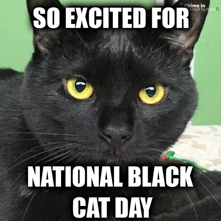 National Black Cat Day Wishes Awesome Images, Pictures, Photos, Wallpapers
