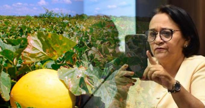 Governadora do RN, Fátima (PT), tenta se aproveitar dos avanços do Governo Bolsonaro com exportação de melão para China