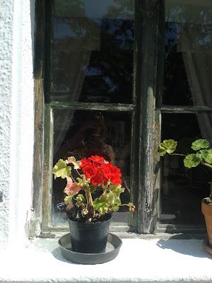 Muskátlis ablak, vidéki élmények