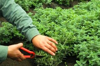 Οι 10 «έξυπνες» καλλιέργειες που μπορούν να απογειώσουν το εισόδημά σας…