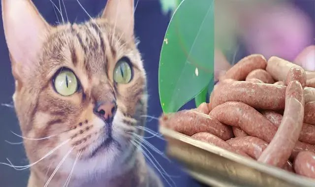 Les Chats Du Bengale Peuvent-Ils Manger Des Saucisses