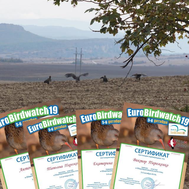сертификаты участников EuroBirdwatch