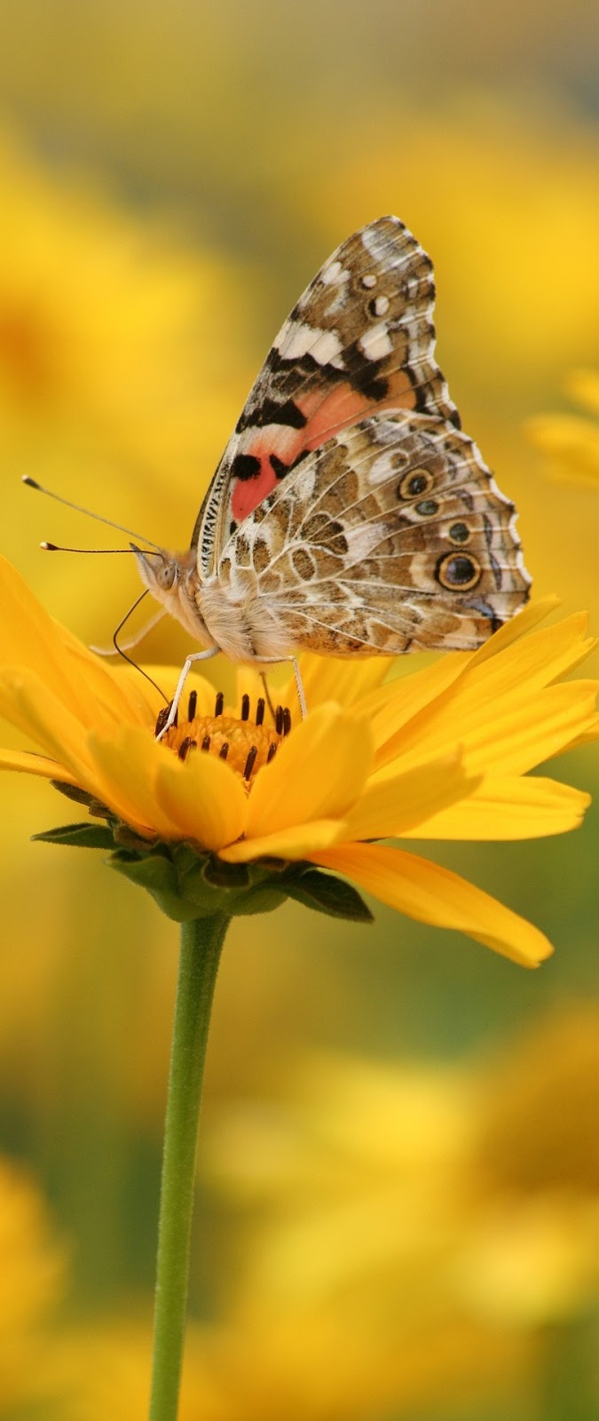 Beautiful butterfly on a yellow flower.