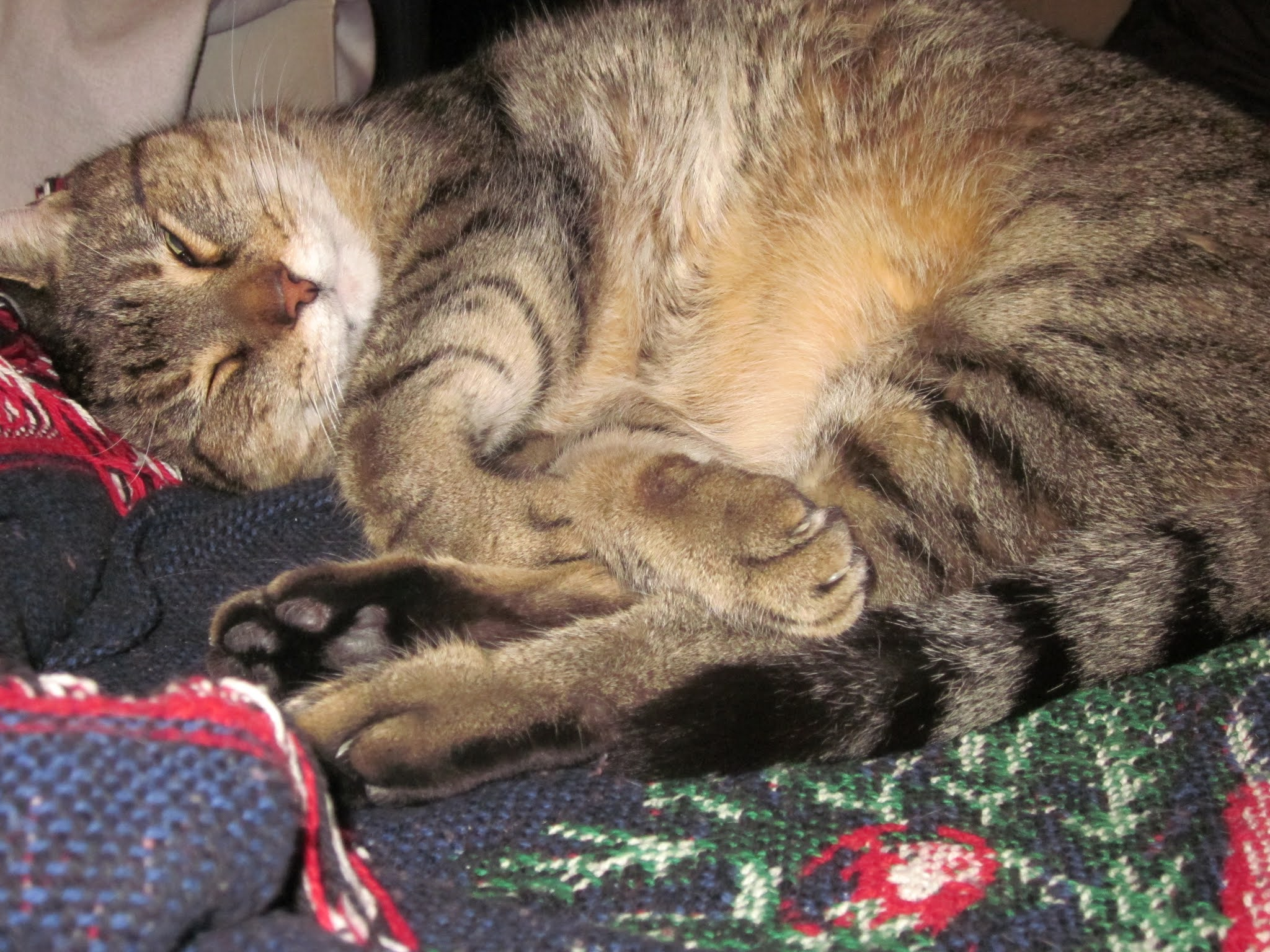 A cat with eyes closed curled up with his paws all jumbled and his stomach showing on a knit blanket