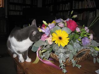 cat eating bouquet