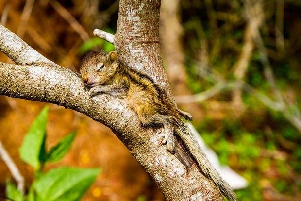 tinny squirrel Rob
