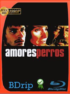 Amores Perros (2000) Latino BDRIP [Google Drive] Onix