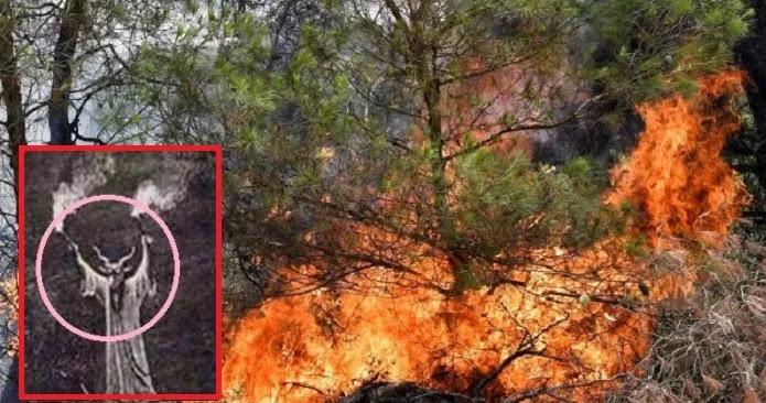 Στις φλόγες η Αχαΐα- Πρόεδρος Αιγιαλείας: «Τους έφυγε η φωτιά-Κάηκαν τουλάχιστον 30 σπίτια στη Ζήρια»- Στα δύο η Ελλάδα