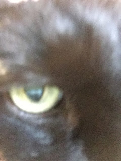 Slightly out of focus eye in a black housecat