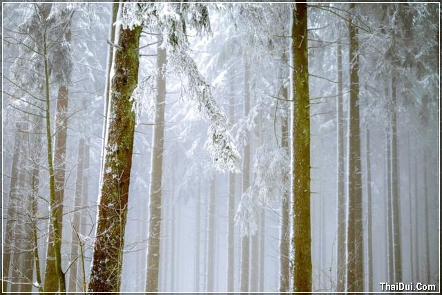 ảnh rừng cây mùa đông đẹp