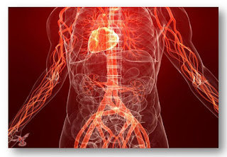 Теплая вода помогает организму улучшить кровь