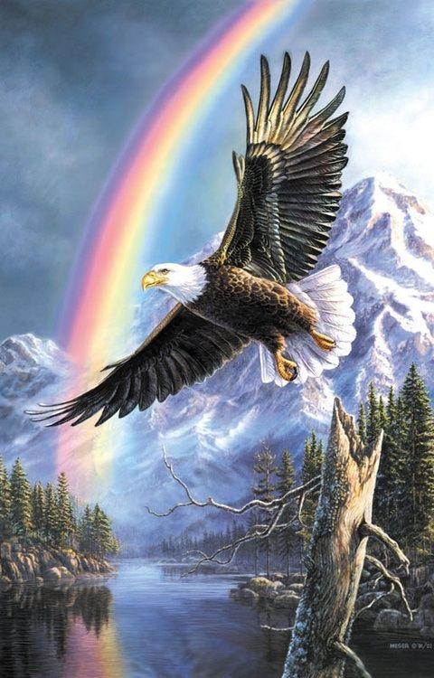 Águia | Eagle