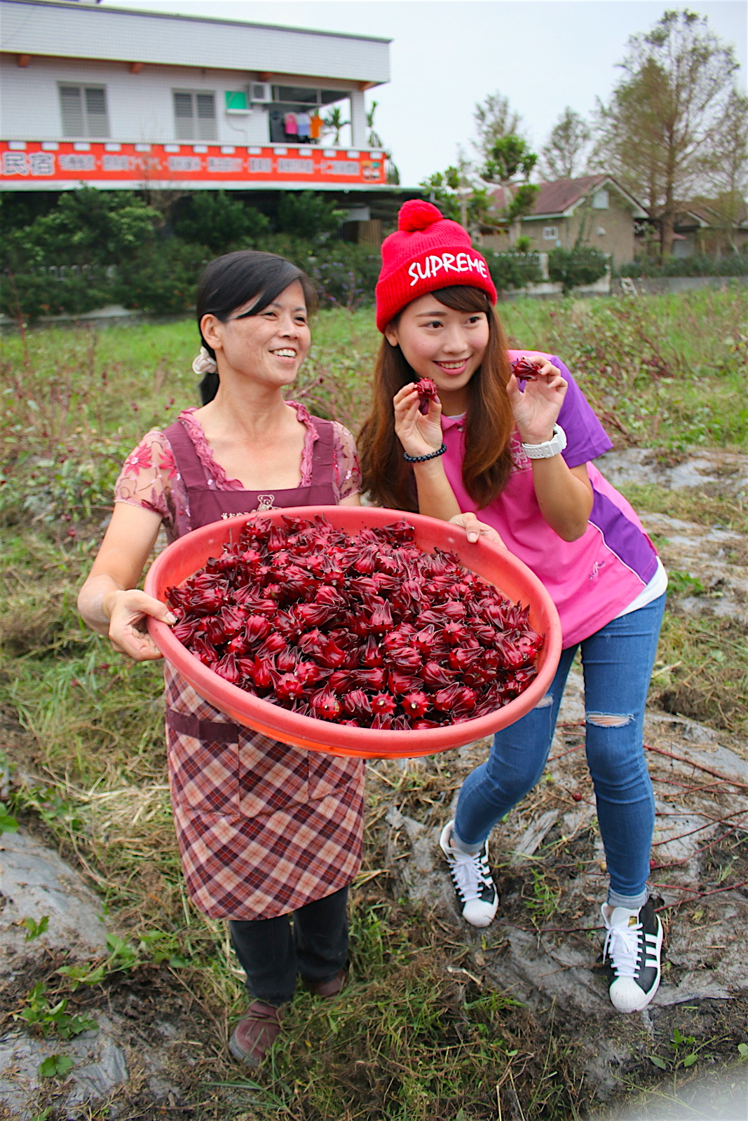 Top 5 Agro Tourism Destinations, Taiwan