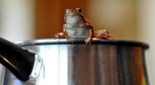 O broască fiartă la cină: Poveste cu tâlc