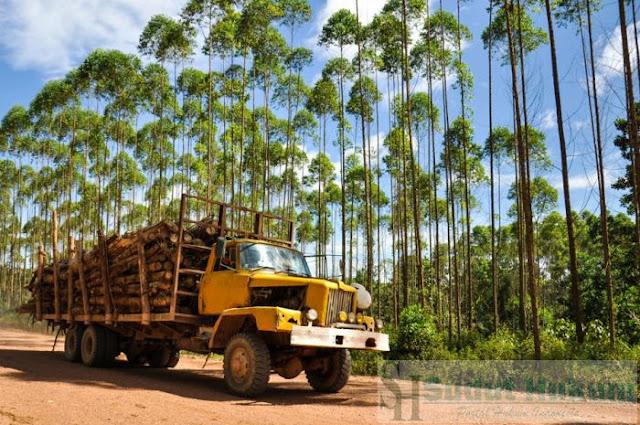 Syarat-syarat Penguasaan Hasil Hutan