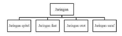Pengelompokan empat jaringan utama