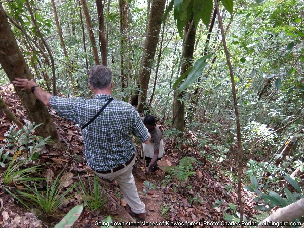 Hiking and birding as well as wildlife watching in West Papua