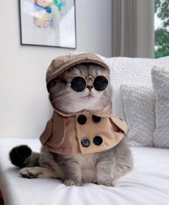 Pleins feux sur les animaux d'Instagram de la semaine: Benson, The Gentleman